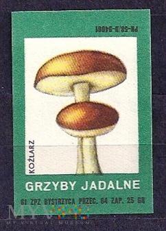 Grzyby Jadalne-kożlarz.4.1961.Bystrzyca