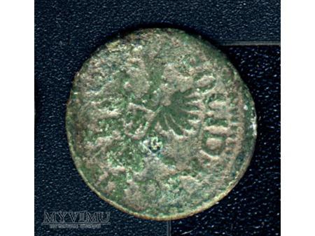 szeląg koronny 1660 6