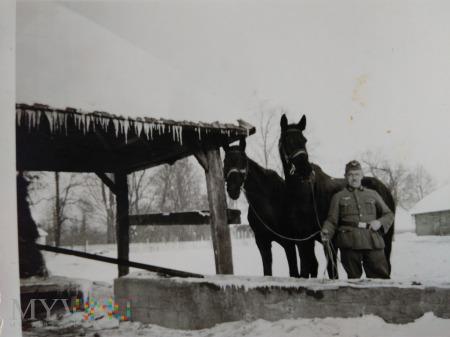 żołnierz i konie
