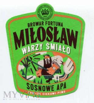 Miłosław, sosnowe IPA