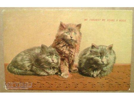 Duże zdjęcie Polujące i zawsze czujne - Wesoła paczka kociaków