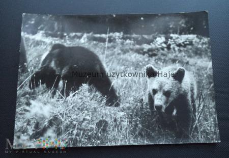 TATRY - Niedźwiedź