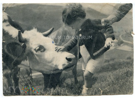 Tyrolska krowa - 1942