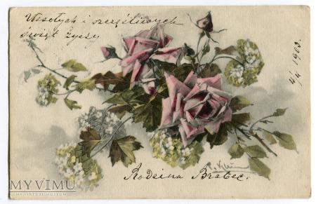 1903 Catharina C. Klein Róże kwiaty