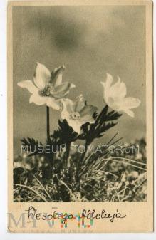 Duże zdjęcie Wesołego Alleluja - 1951