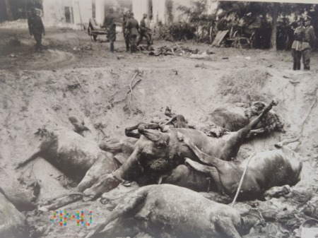 zabite konie 1939