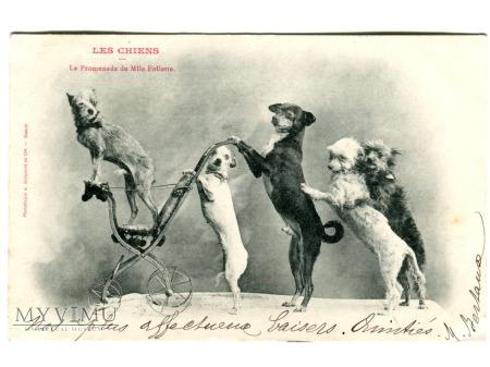 Duże zdjęcie 1903 Panienka Follette idzie na spacerek ALE CYRK