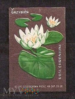 Rośliny chronione.9.1962.Częstochowa