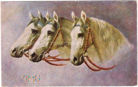 Koń - portret