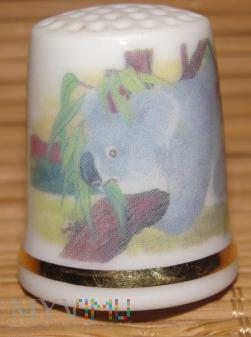 (1)WESTMINSTER-koala