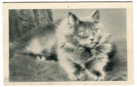 Mały koteczek robi sobie focię ......pocztówka