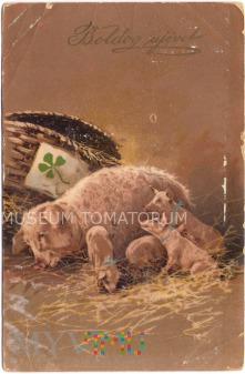 Świnka Noworoczna - 1910