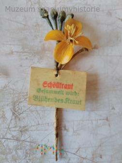 KWHW Schöllkraut (glistnik jaskółcze ziele)