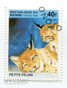 Koty i ich małe Benin 1995 708ba do 708be