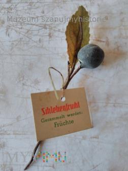 KWHW Schlehenfrucht (owoc śliwy tarniny)