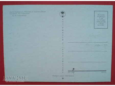 1983 Szympans ZOO karta Maximum Maksimum
