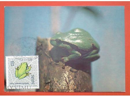 Duże zdjęcie 1987 żaba rzekotka drzewna karta Maximum Maksimum