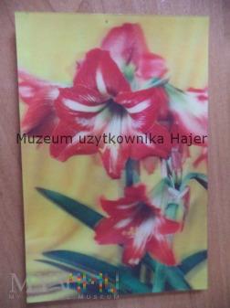 Kwiaty Zwartnica pocztówka trójwymiarowa 3D