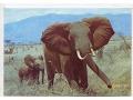 Zobacz kolekcję Kenya
