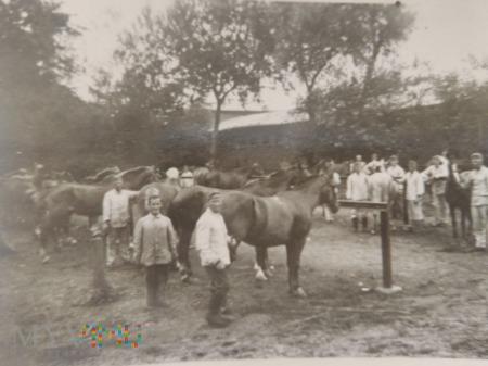 żołnierze z końmi