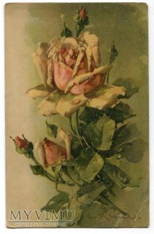 Catharina C. Klein Róże żółte kwiaty flowers