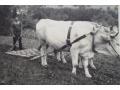Zobacz kolekcję Fotografia wieś praca w polu