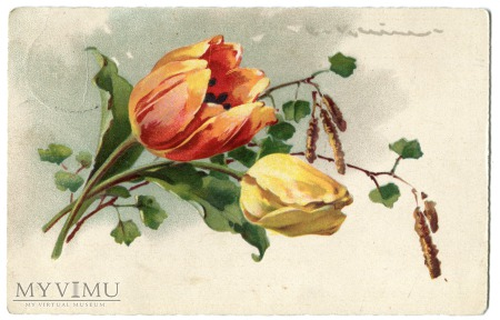 1928 Catharina C. Klein tulipan kwiaty Flowers
