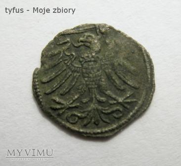 DENAR ELBLĄSKI Zygmunt Stary (b.d.)
