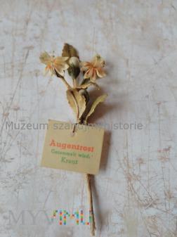 KWHW Augentrost (świetlik łąkowy)