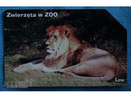 Zwierzęta w ZOO 5 (10)