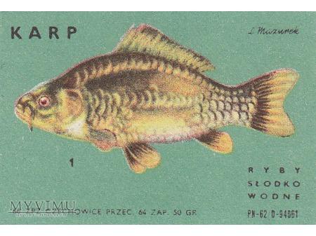 Etykiety z rybami słodkowodnymi (cz. 1)