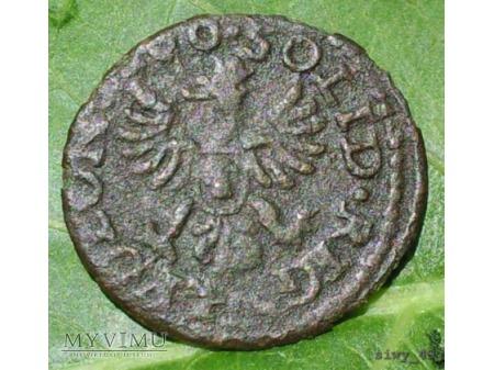 szeląg koronny 1660 17