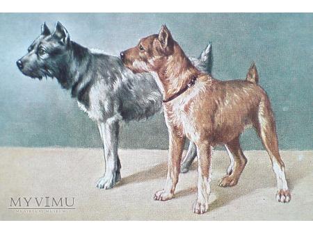 Psy na starej pocztówce ( Peter Luhn Barmen ? )
