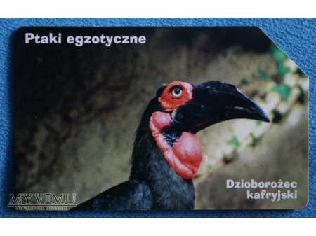 Ptaki Egzotyczne 6(10)