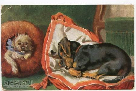 Dachshund - Jamnik w objęciach Morfeusza 1908