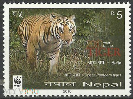 2010/Tiger