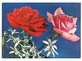 Zobacz kolekcję Pocztówki - kompozycje kwiatowe