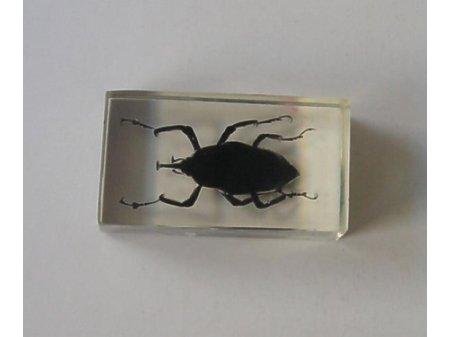 Owady i pajęczaki 8