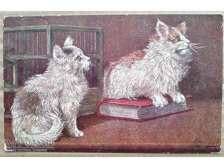1918 Kocia edukacja - uczony kotek i książka