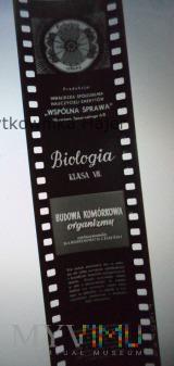 Budowa komórkowa organizmu . Biologia Klasa VII
