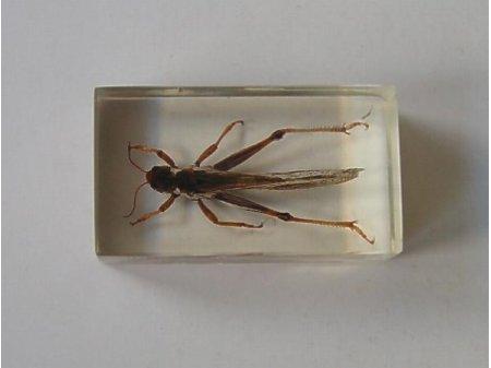 Owady i pajęczaki 9