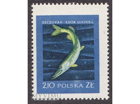 Szlachetne gatunki ryb - 1958