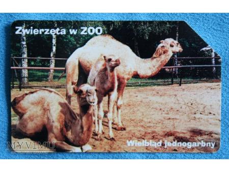 Zwierzęta w ZOO 7 (10)