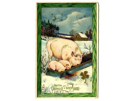 1912 Nowy Rok Świnia Świnki czterolistna koniczyna