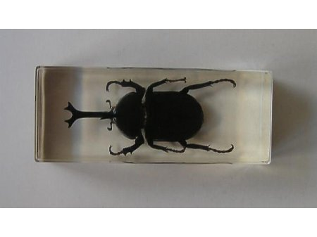 Owady i pajęczaki 10