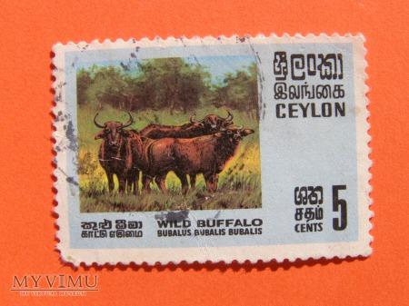 004. Ceylon