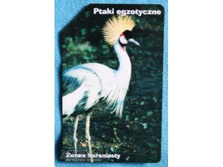 Ptaki Egzotyczne 7(10)