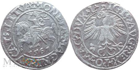 Półgrosz 1561 Wilno