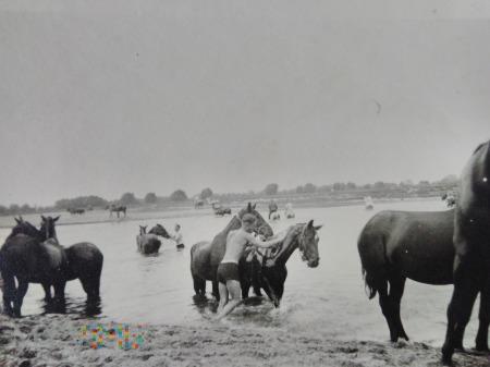 mycie koni w rzece
