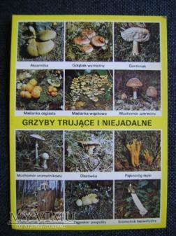 grzyby trujące i niejadalne